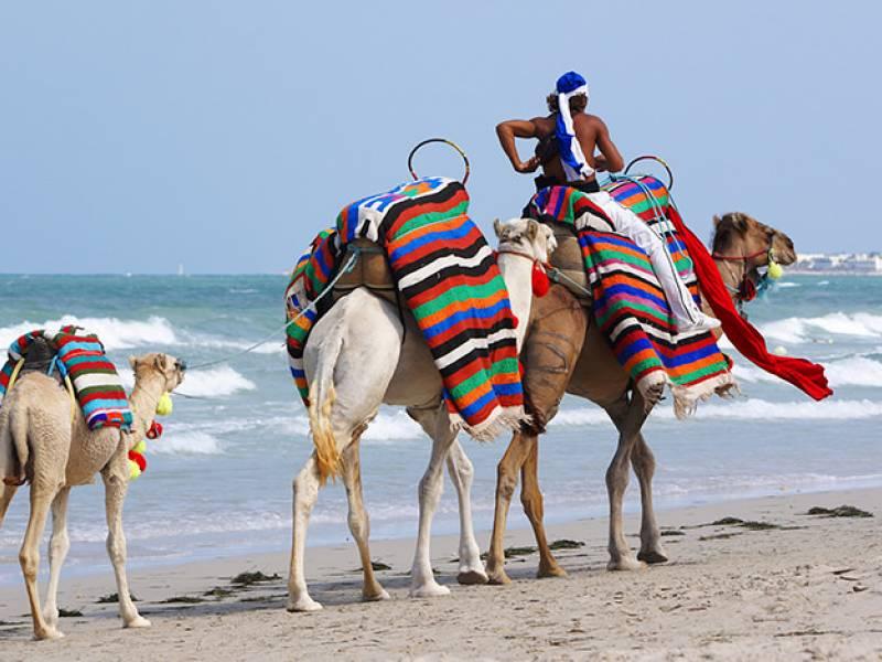 Escursioni Tunisi