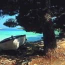 Gastronomia Isola di Murter