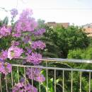 Apartment Cтудия, № 3 Apartments Knezevic Budva | Cipa Travel